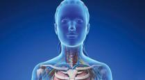 corpo donna 3d Fisioterapia