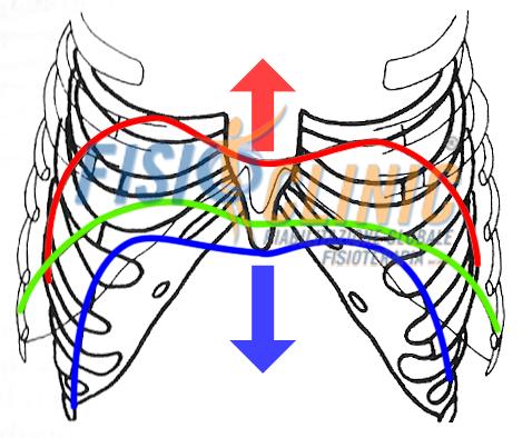 diaframma Paradossa respirazione Trattamento Fisioterapia Reflusso Gastro Esofageo Ernia Iatale diaframma Centro Fisioterapia Cura Roma Rieducazione Posturale Globale Souchard Rpg
