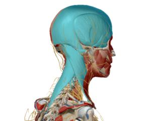 Fisioterapia per il Mal Di Testa cervicale