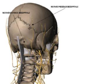 Fisioterapia per il Mal Di Testa cefalea